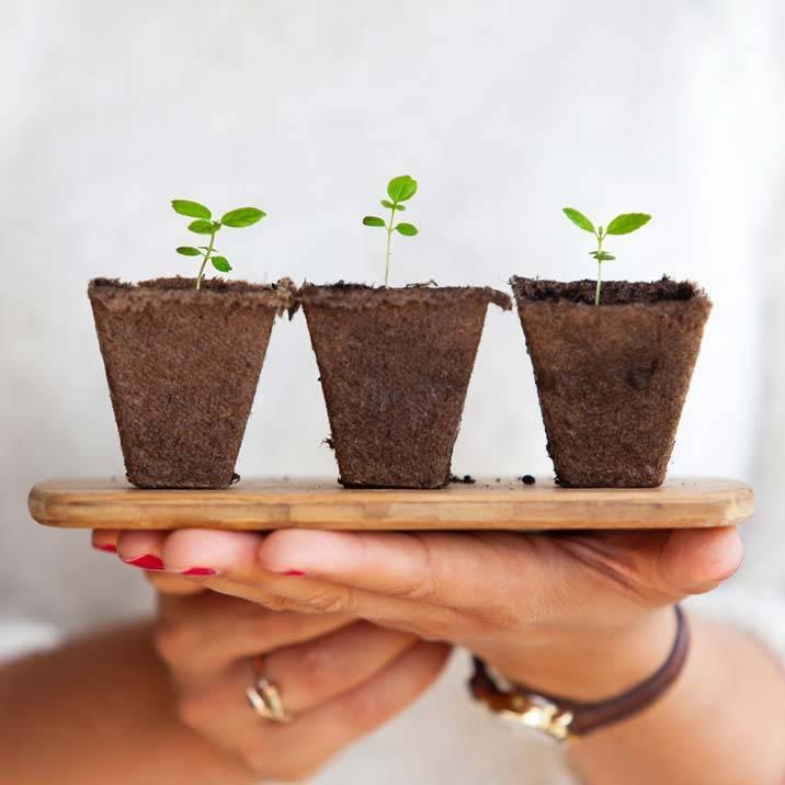 10 dicas para iniciantes da jardinagem