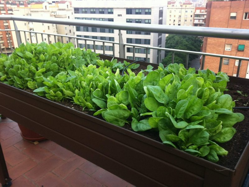 Mesas de cultivo varanda