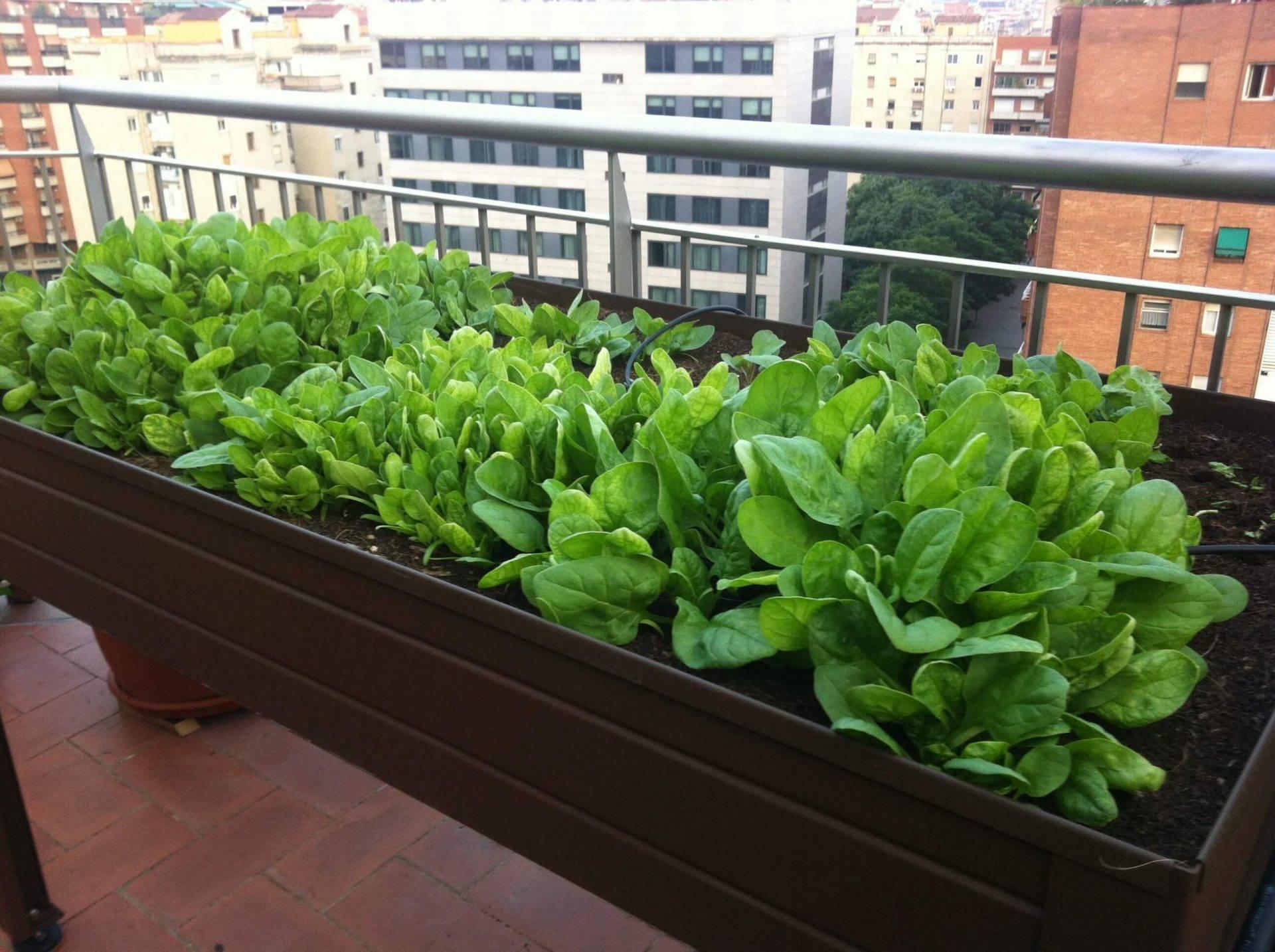 Mesas e Kits de Cultivo