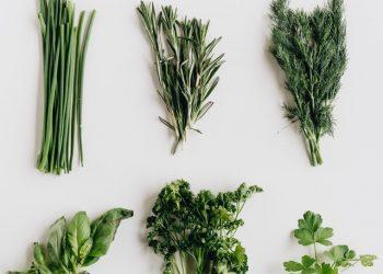 5 Ervas Aromáticas para Plantar em Sua Casa