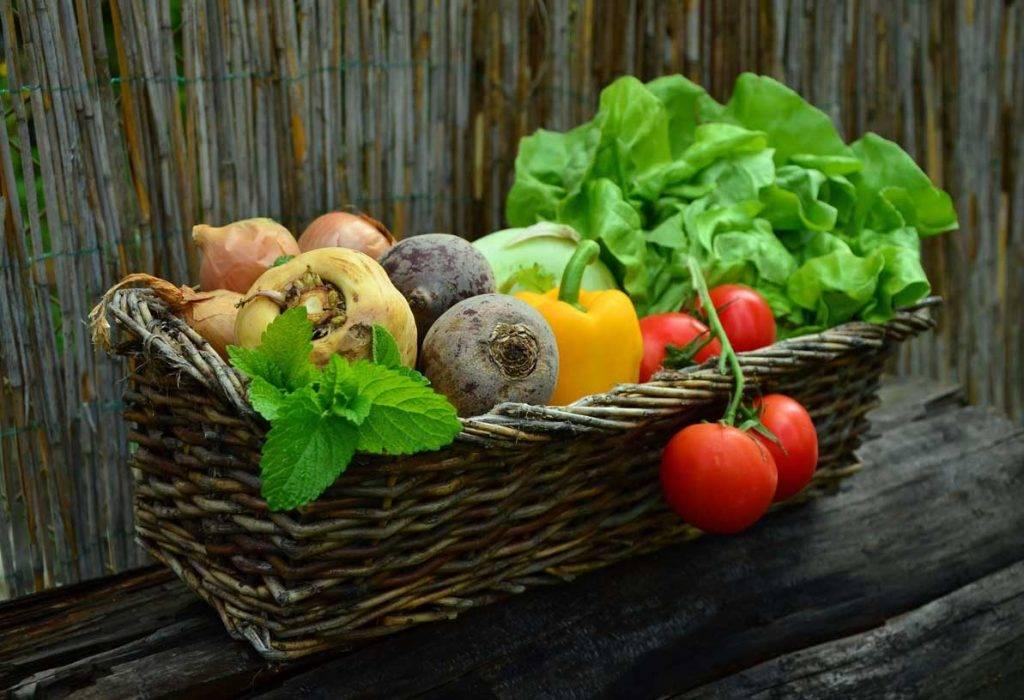 melhores legumes para plantar