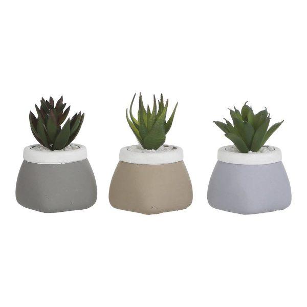 Planta Cato Em Vaso H9Xd6Cm