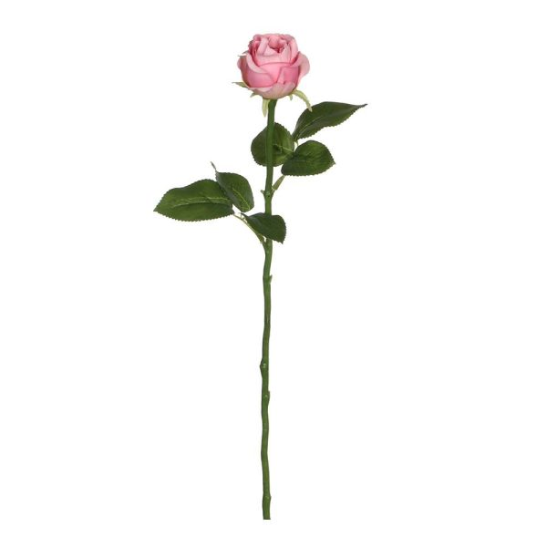 Rosa Rosa 45Cm