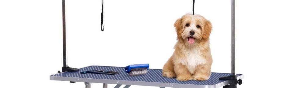 Categoria Mesas de Prepadimração Canina