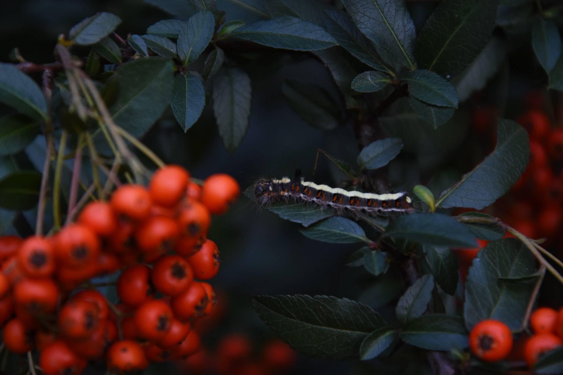 5 Dicas para afastar os insectos de jardim de uma vez por todas! 1