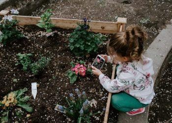 O-Meu-Jardim-10-dicas-para-iniciantes-da-jardinagem