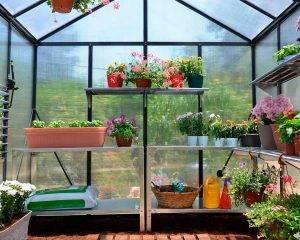 Estufa de Jardim Glory em Policarbonato para Cultivo de Plantas 1