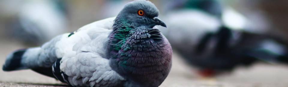Categoria Aves O Meu Jardim