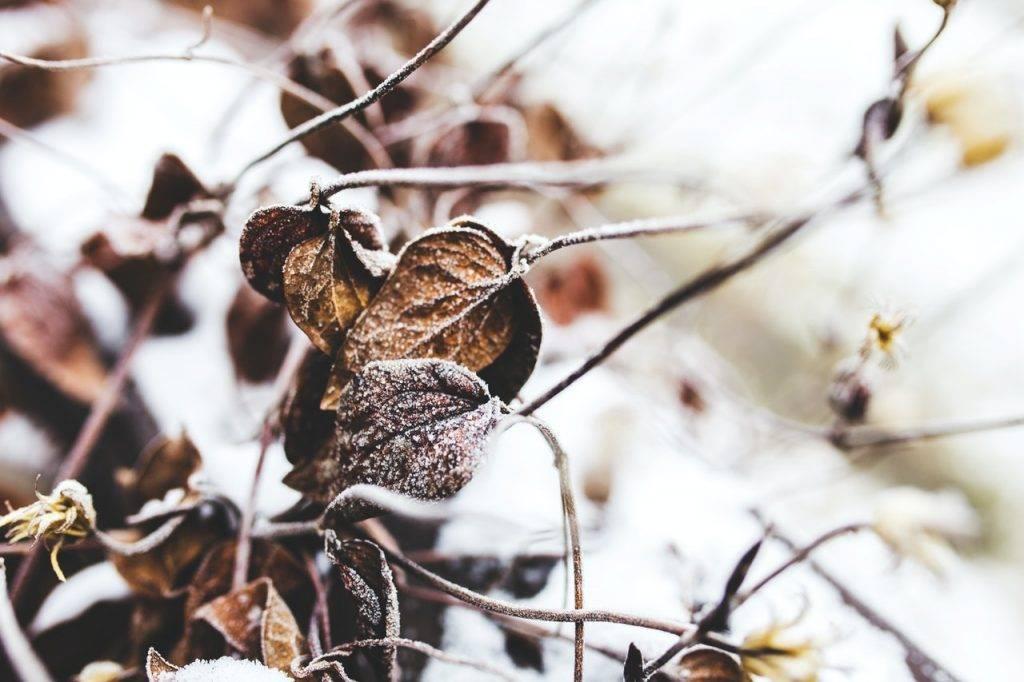 Como Preparar o Jardim para o Inverno