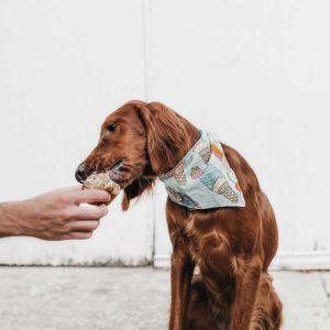 Ração para cão