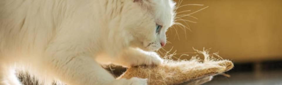 Categoria Arranhadores para Gatos OMJ