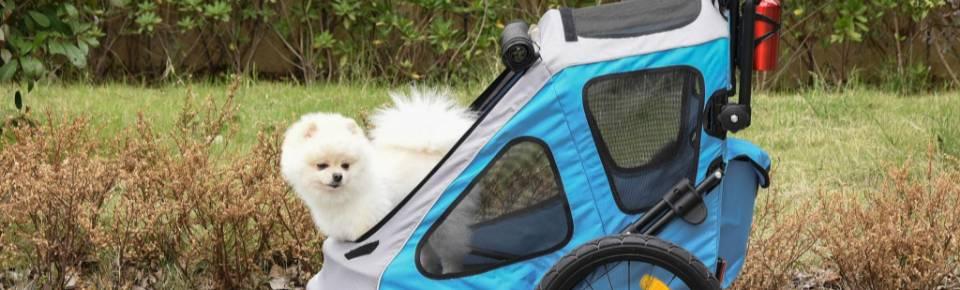 Categoria Transporte de Cães
